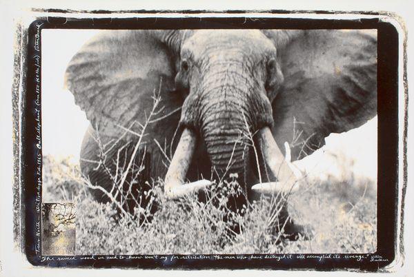 Expertise photographie Peter Beard
