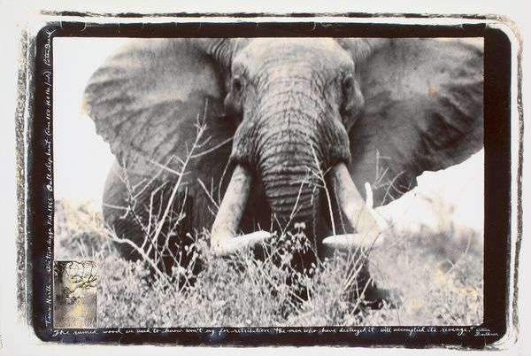 Expertise photographie Peter Beard